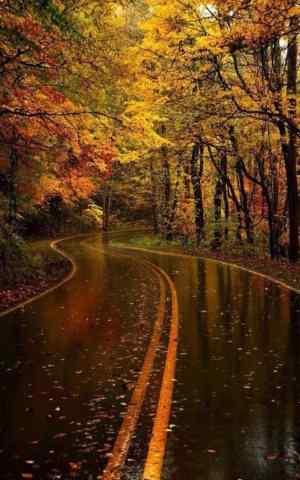 充满意境的秋日枫