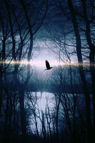 小清新树林中的鸟