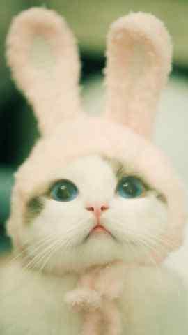 猫咪兔耳朵可爱桌