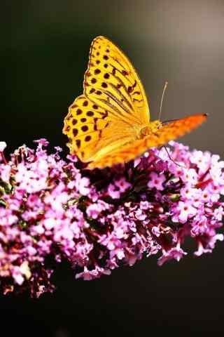 唯美的蝴蝶高清手