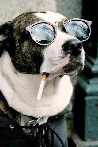 酷酷的抽烟的狗狗