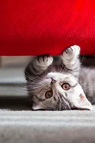 萌猫和沙发高清手