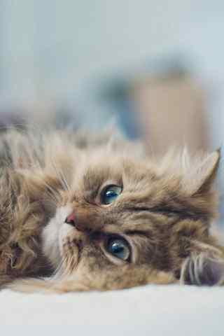 萌猫写真手机桌面