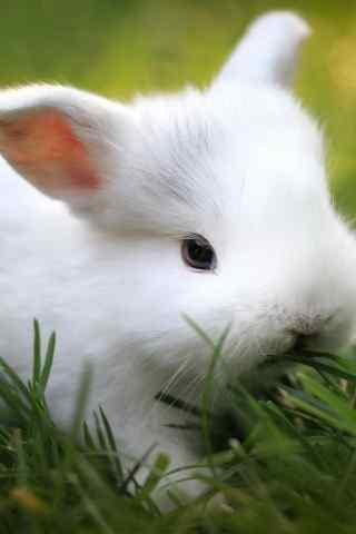 小白兔可爱手机壁