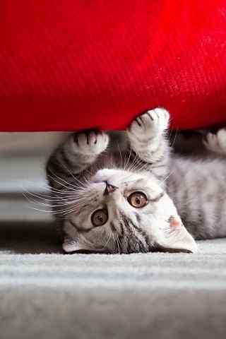 沙发下萌翻了的小
