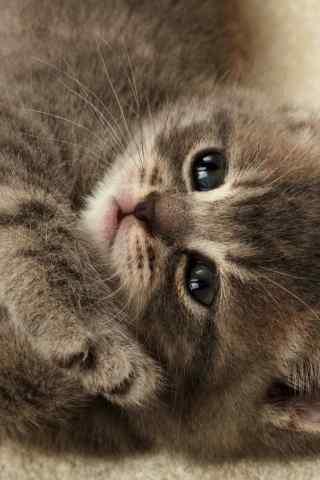 超萌的猫咪动物手