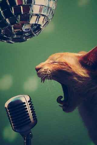 会唱歌的猫搞笑动
