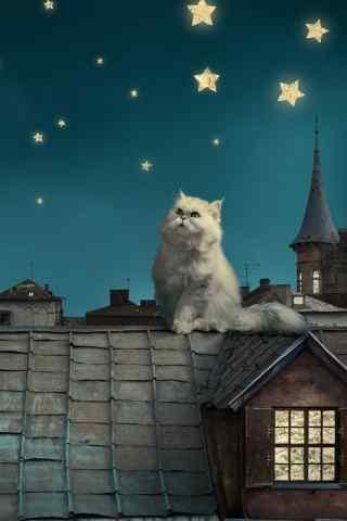 屋顶上的猫咪可爱