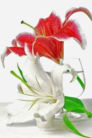 近物-鲜花的特写