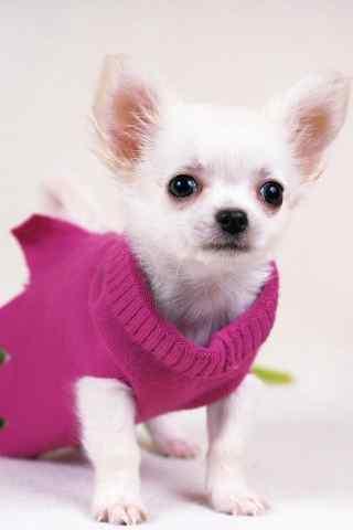 穿着毛衣的可爱狗