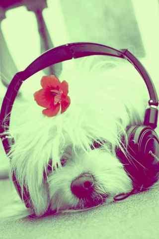 戴耳麦的狗狗手机