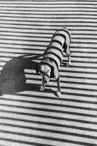 阳光下的狗狗创意