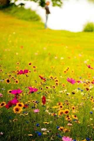绿色护眼之草地上