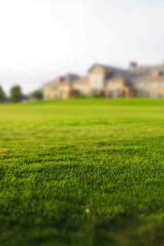 欧美城堡前的草地