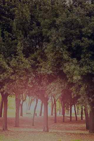 迷雾森林高清手机背景