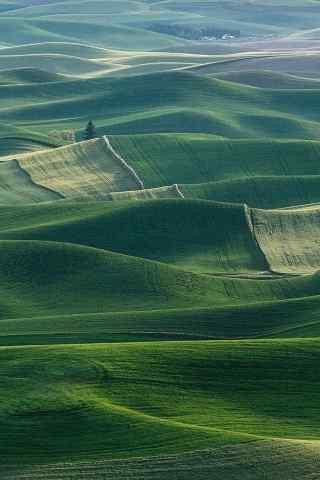 绿绿的草地平原景