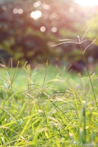 梦幻草地风景安卓