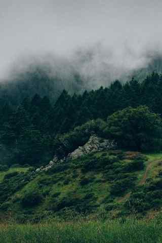 唯美如仙境的雾中森林高清手机壁纸下载