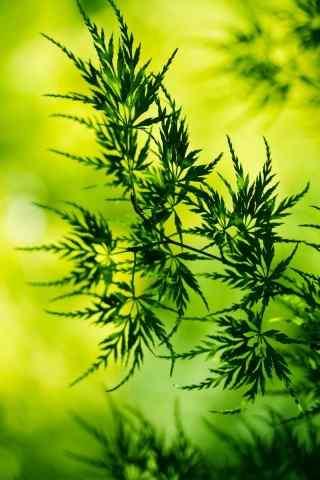 高清绿叶写实风景手机壁纸