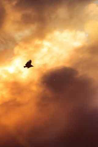 夕阳下的老鹰手机壁纸下载