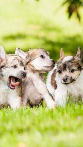 小狗动物近距摄影