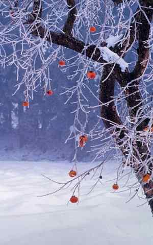 2016年Bing雪景主题高清手机壁纸