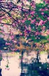 植物|梅花图片大全高清手机壁纸