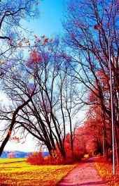 秋景|红色秋天的