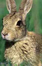 兔子|可爱小白兔
