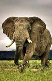 大象|大象高清手