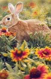 萌宠|萌宠小灰兔