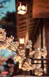 梅花|梅花的图片高清手机壁纸