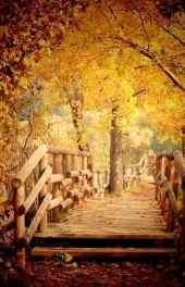 秋景|黄色秋天的
