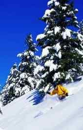 滑雪|冬季滑雪运