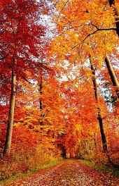 秋景|金色秋季树