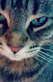 可爱猫咪|可爱的