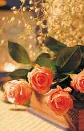 玫瑰|玫瑰代表我