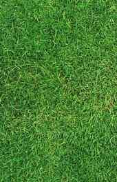 綠色|綠色草地護眼高清手機壁紙