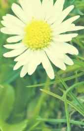 清新|清新白色花