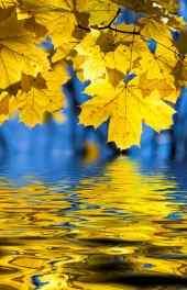 秋景|秋天的枫叶