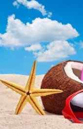 椰子|椰子海星图