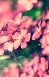 清新|清新植物花