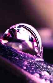 紫色水珠手机壁纸