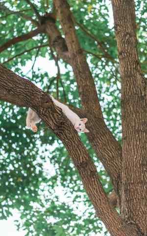 树上可爱猫咪高清高清手机壁纸
