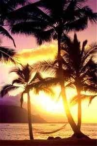 夏日夕阳黄昏海边椰子树手机壁纸