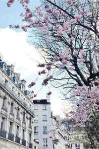 唯美樱花风景高清手机桌面壁纸