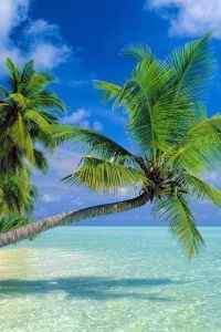 海边沙滩唯美风景