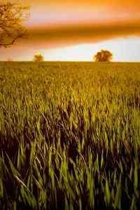 田园风景唯美景色图片高清手机壁纸图集