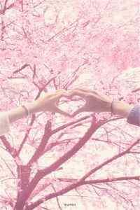 浪漫日本樱花风景