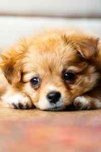 可爱宠物狗高清手
